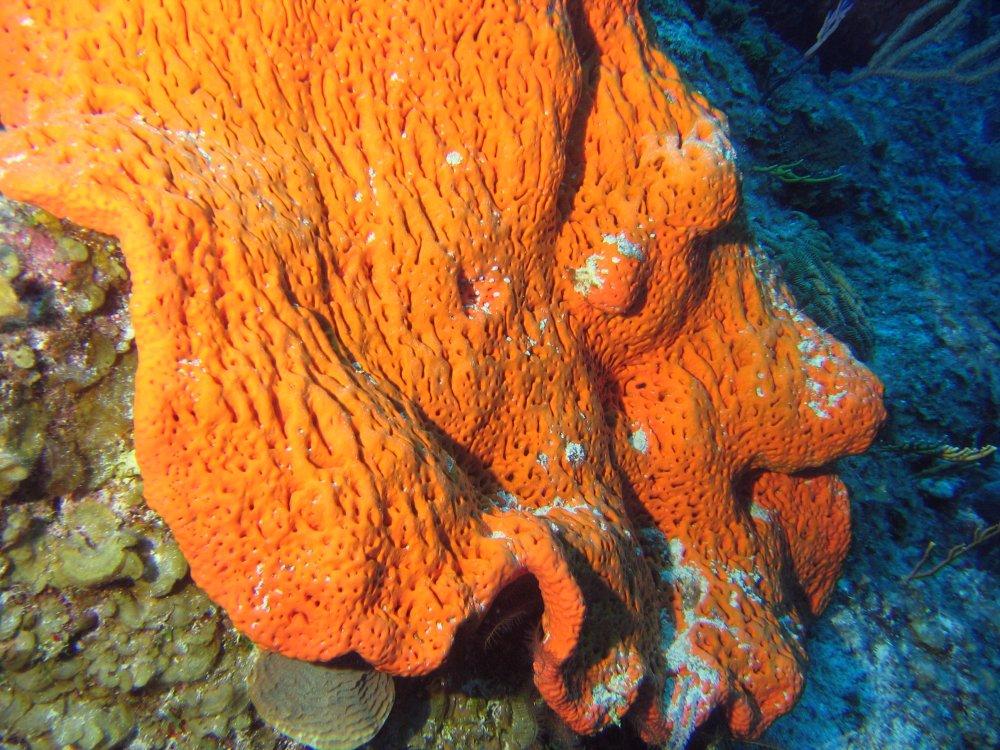 external image elephantear2.jpg